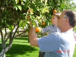 henry and grandpa picking citrus on dec 22