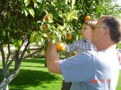 henry and grandpa picking citrus on dec 22
