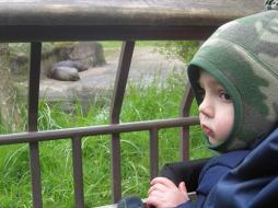 hippo watch