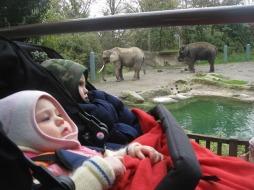 little humans big elephants